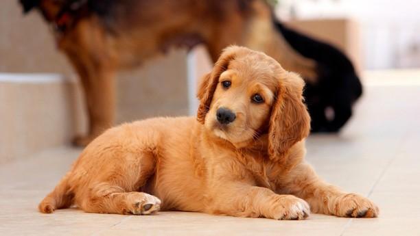 Perro con cara de humano causa furor en las redes
