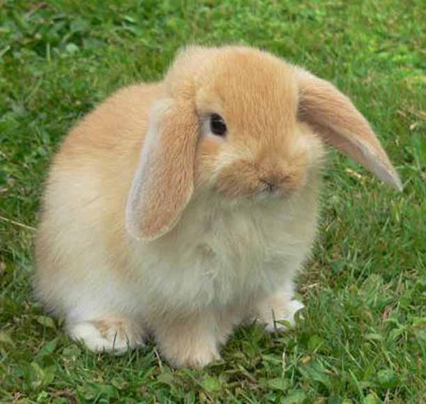 Queman miles de conejos para generar calor